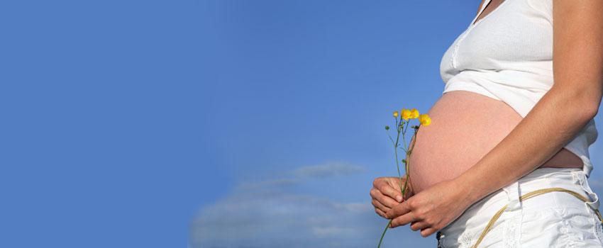 Flores De Bach Para El Embarazo